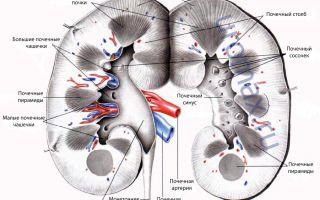 Мочевой синдром при гломерулонефрите
