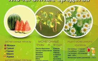 Мочегонные травы список для почек