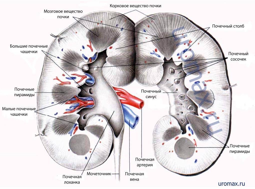 Артериальная гипертензия при гломерулонефрите - Все про гипертонию