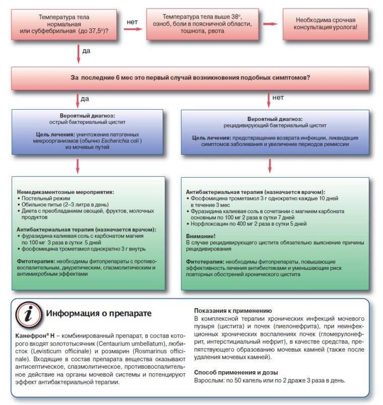 схема лечения Канефроном